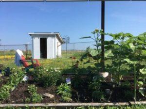 Jardin papillon à l'école Gisèle Lalonde